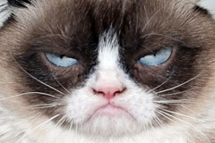"grumpy cat says ""drat. My password was cracked."""