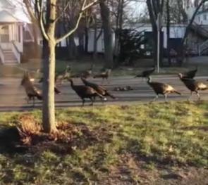 turkey_circle